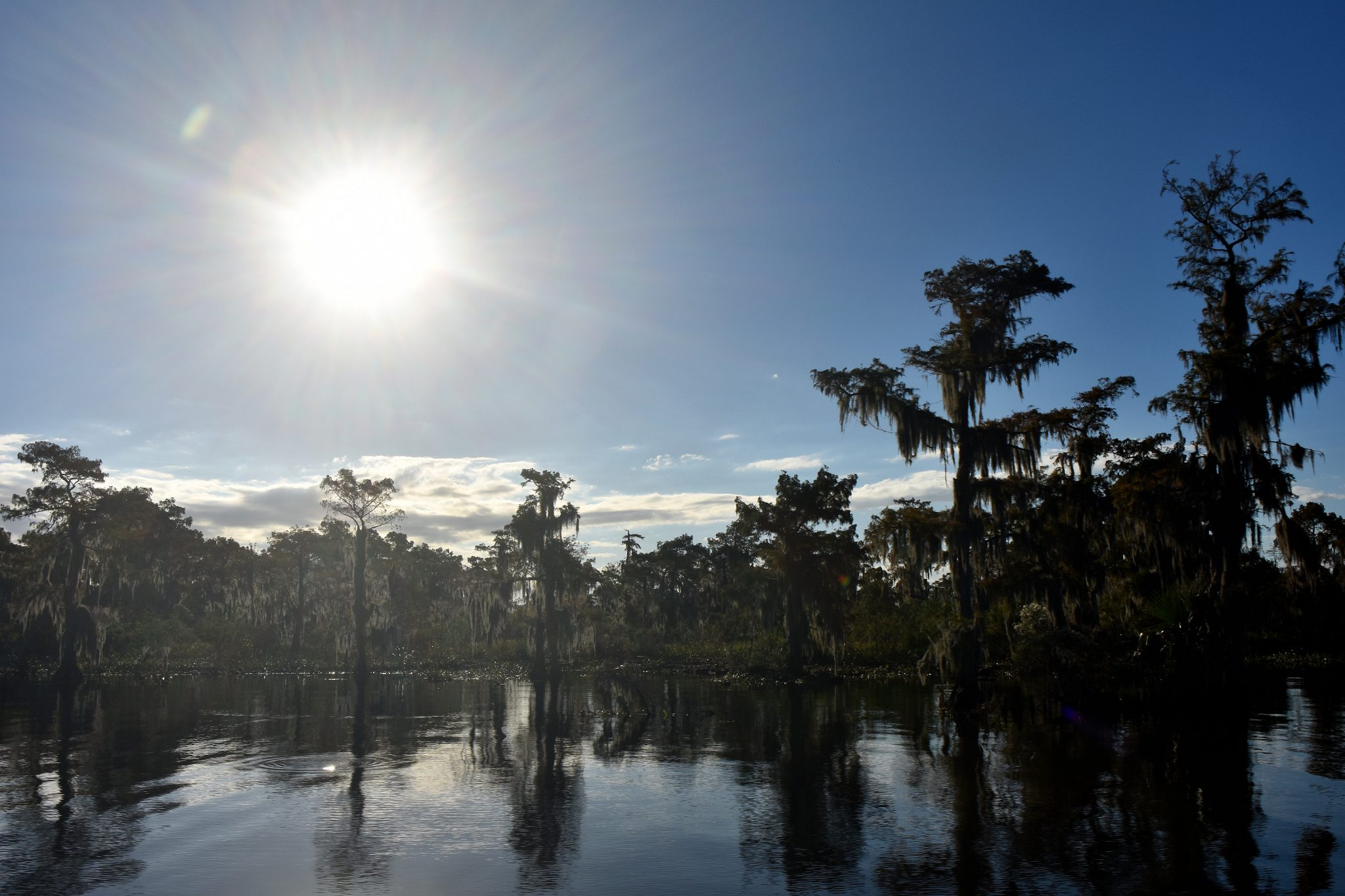 Bayou Tours: See The World Just Outside New Orleans